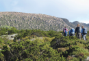 Free bushwalk fun this autumn