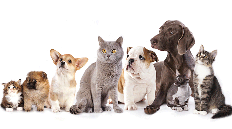 How To Get Cats And Dogs To Live Together