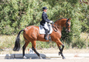 Horse power galore at State Dressage Championships